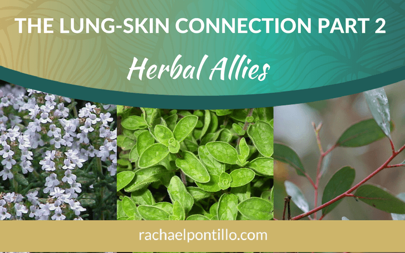 The Lung-Skin Connection Part 2: Herbal Allies